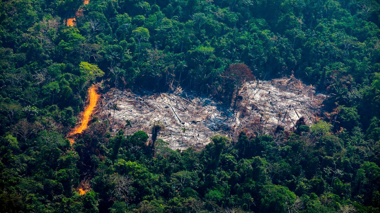 World Failed to Meet a Single Goal to Save Nature: UN Biodiversity Report
