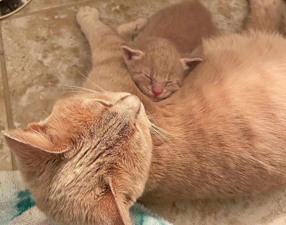 cat, kitten, snuggles