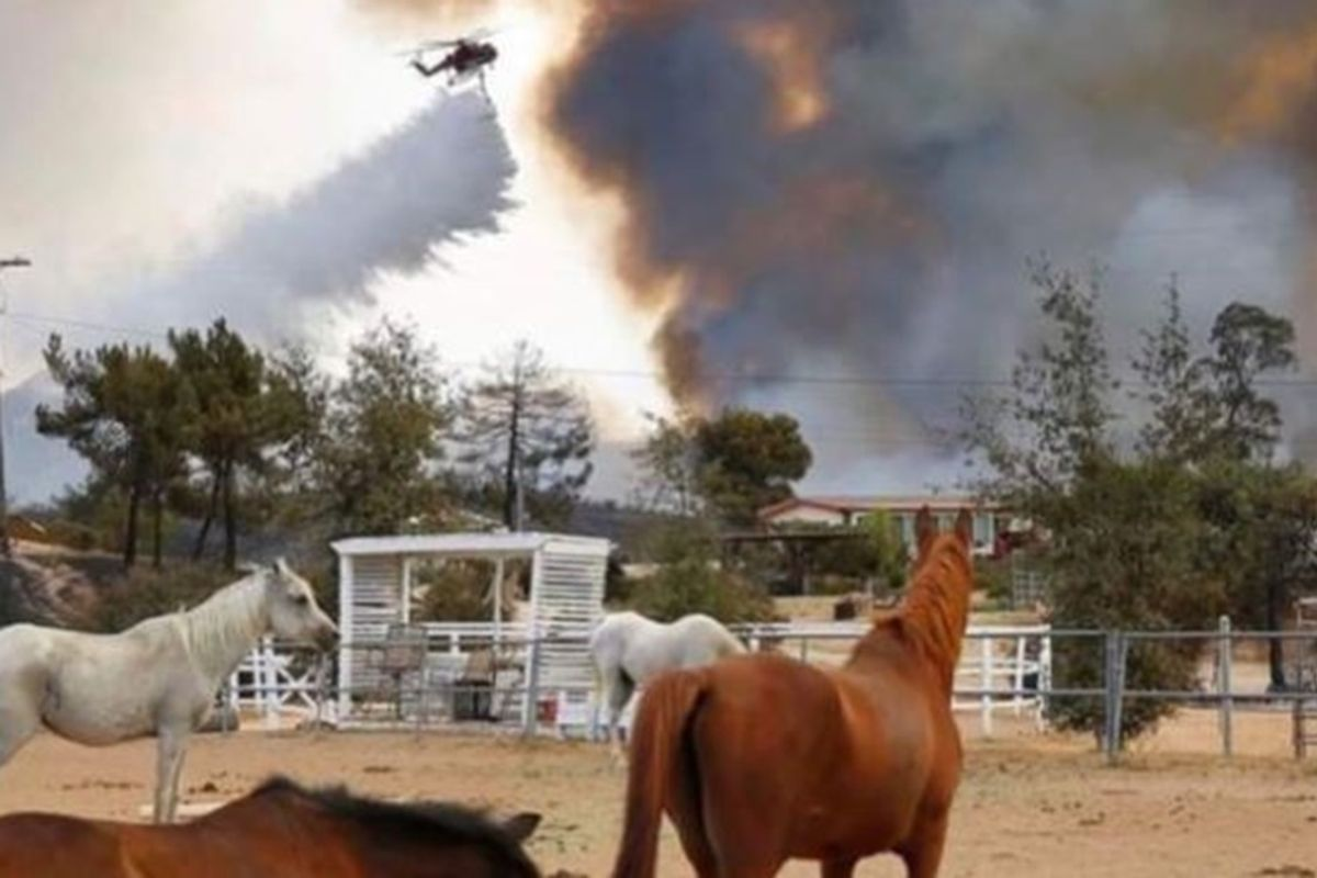 A horse sanctuary was reduced to ashes in a California fire, but all 20 horses miraculously survived
