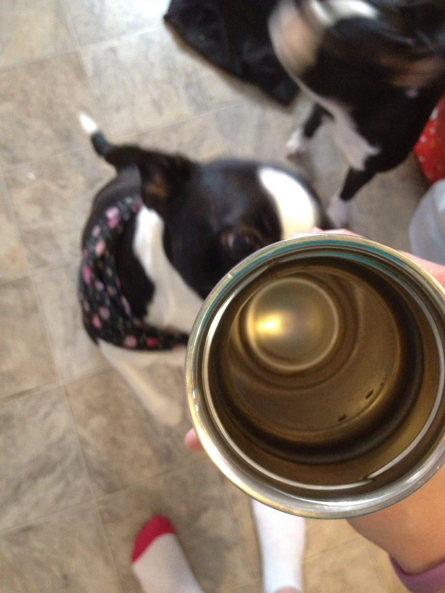 How To Clean Stains And Odor From A Travel Mug B C Guides