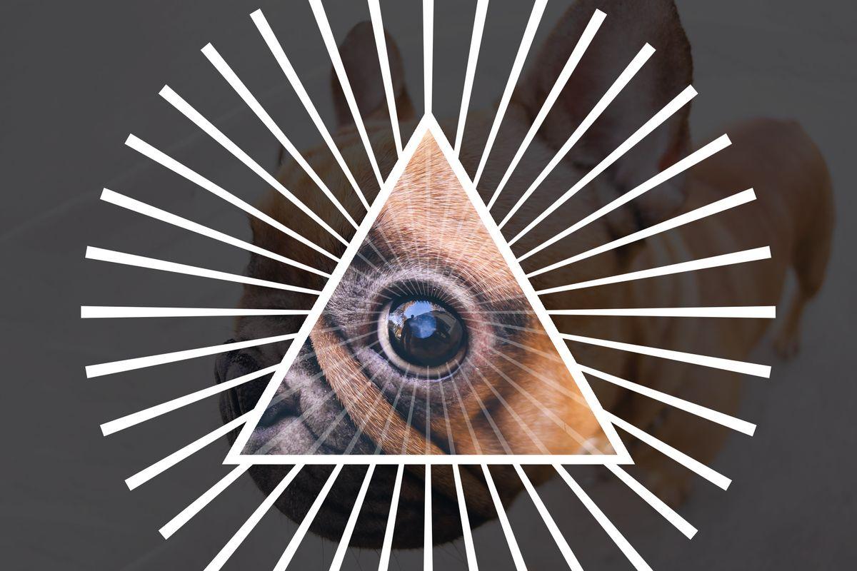 The Meme Illuminati: Behind Instagram's Comedy Empire
