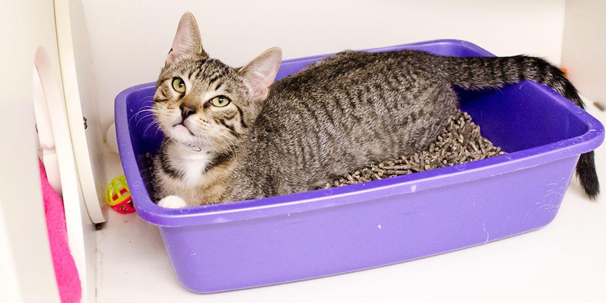 The 8 Best Cat Litters to Buy Online