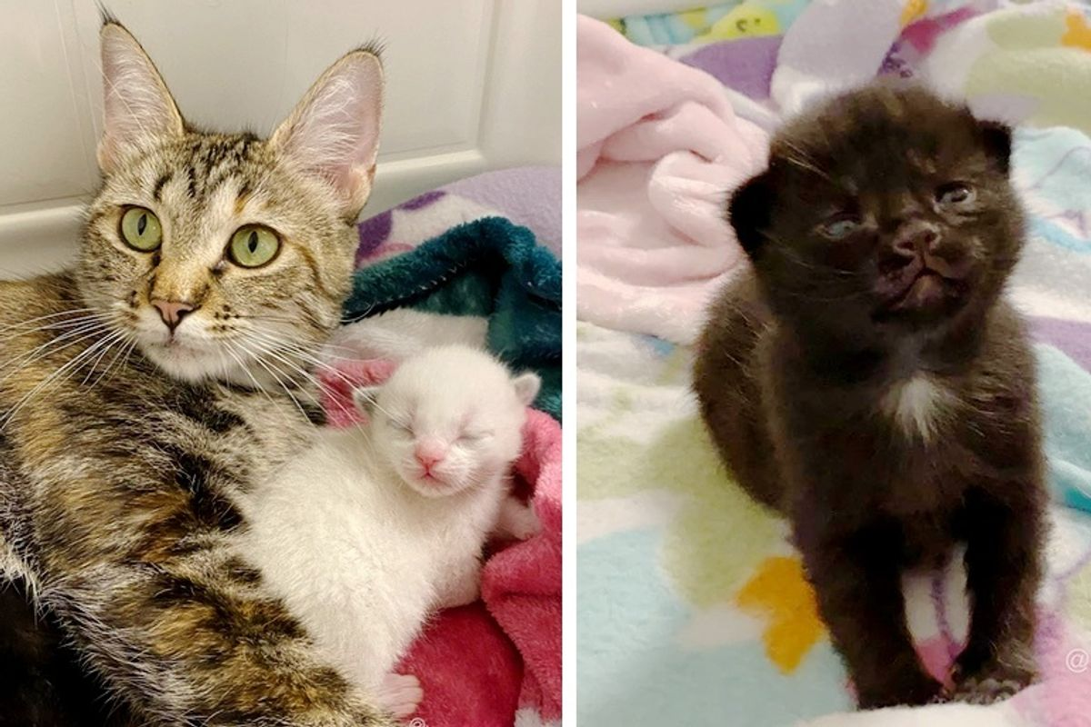 Stray Cat So Happy to Find Help for Her Kittens After Being Rescued By Kind Neighbor
