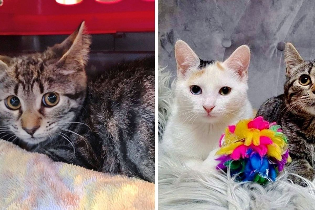 Shy Kitten Finds Confidence in Another Cat After Being Rescued from Outdoor Life