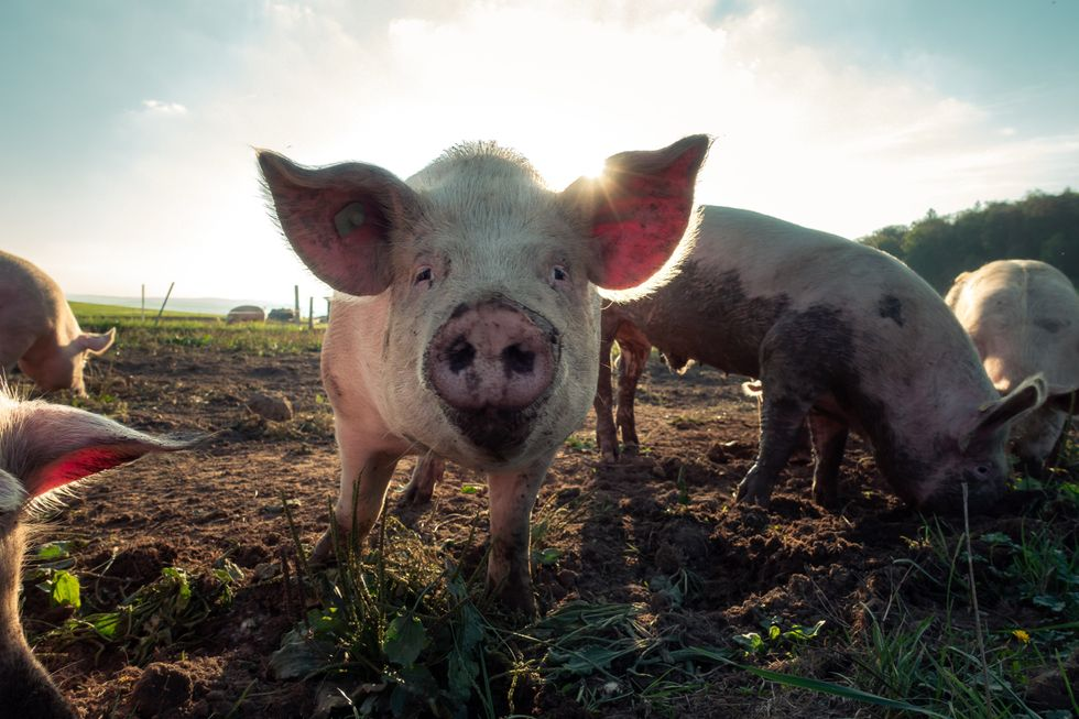 How VR Can Grow Animal Rights Advocates