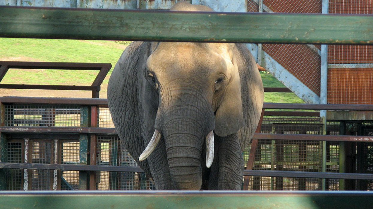 Keeping Large Mammals Captive Damages Their Brains