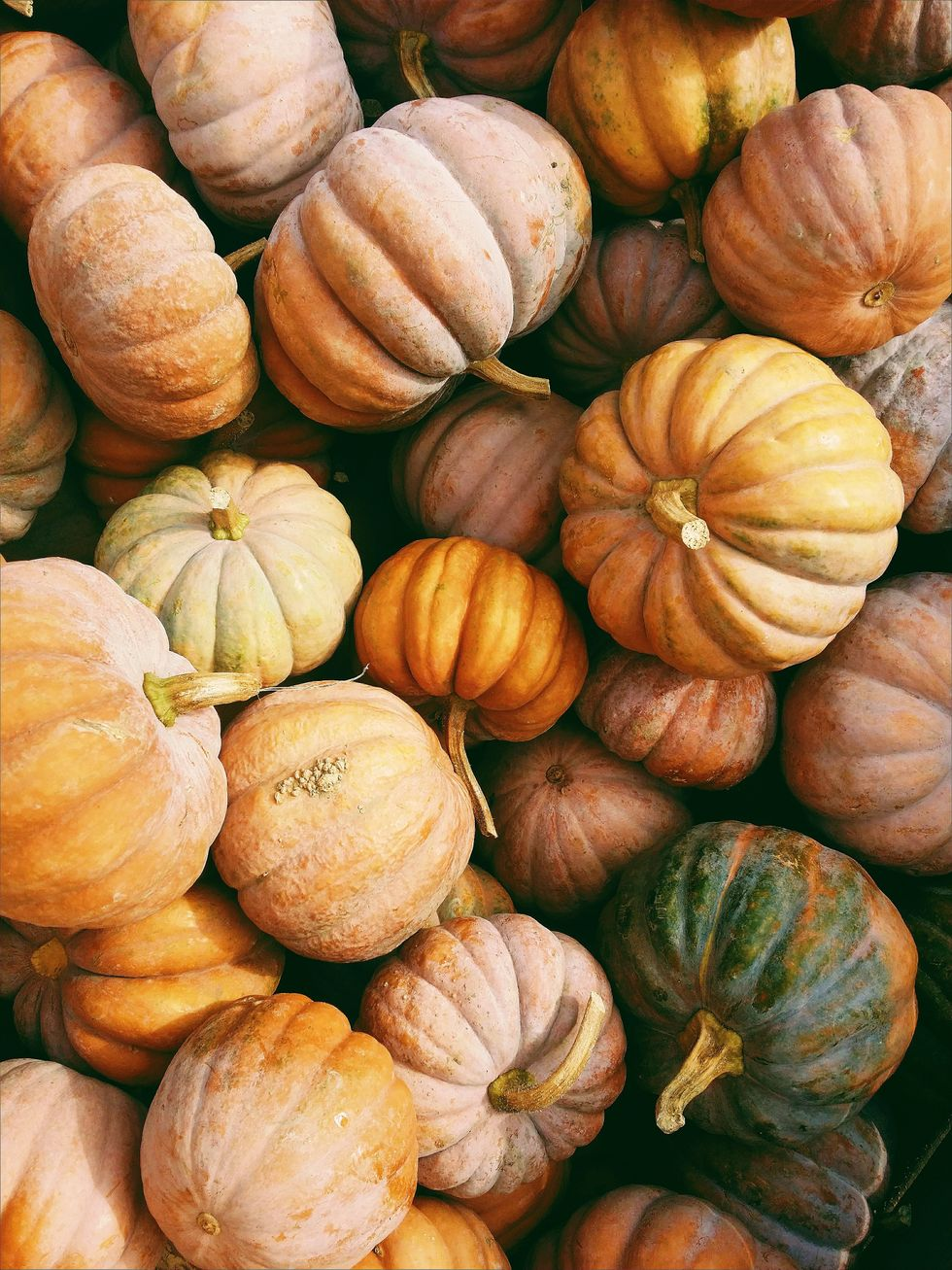 Fall Festivities That You Can Still Safely Enjoy This Year