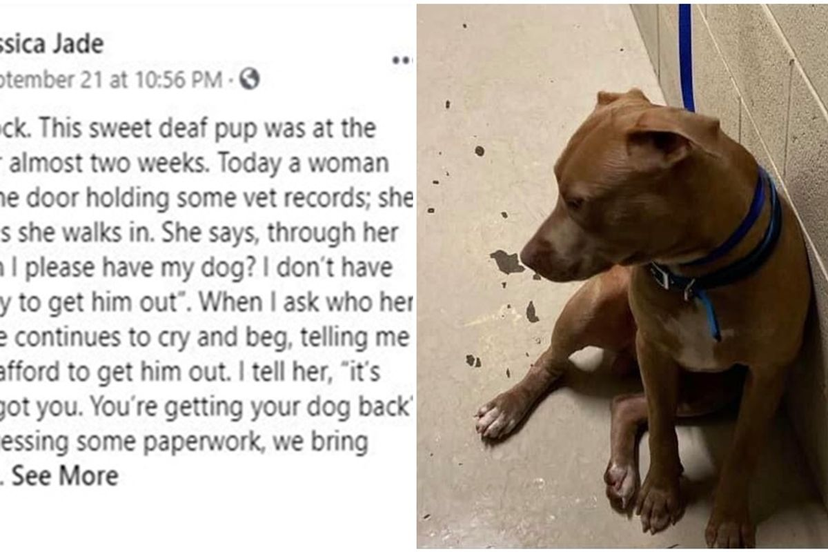 Dog owner gets an assist from Florida shelter after she couldn't pay the fee to get her pet back