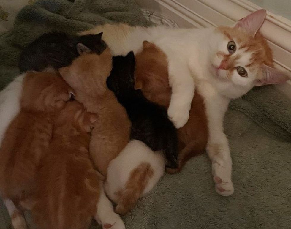 cat, nursing cat, kittens