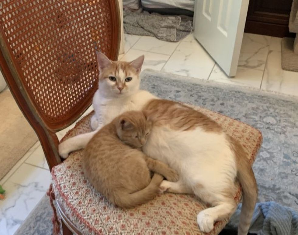 Cat, kitten, cuddling