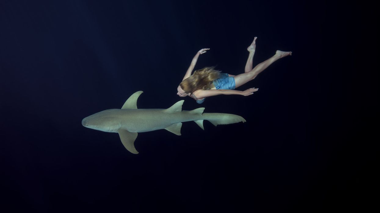 Will 500,000 Sharks Be Slaughtered for a COVID-19 Cure?