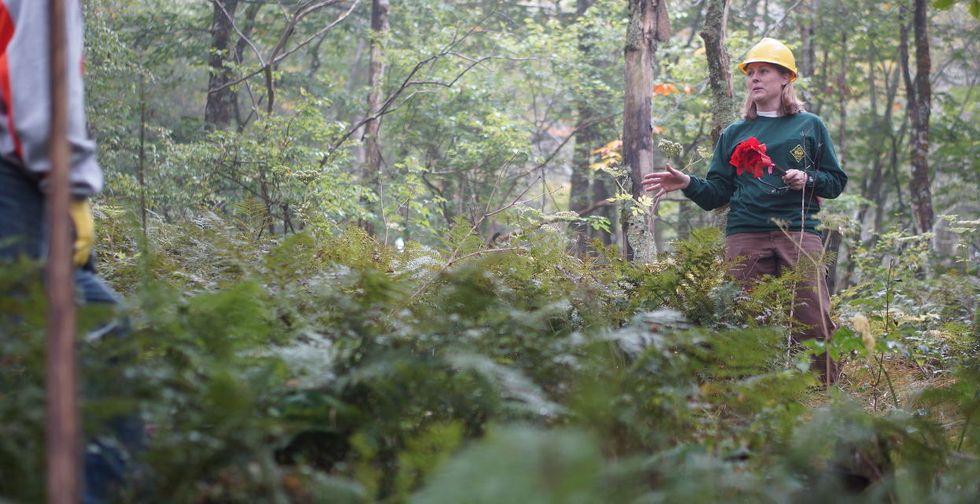 North Carolina forest