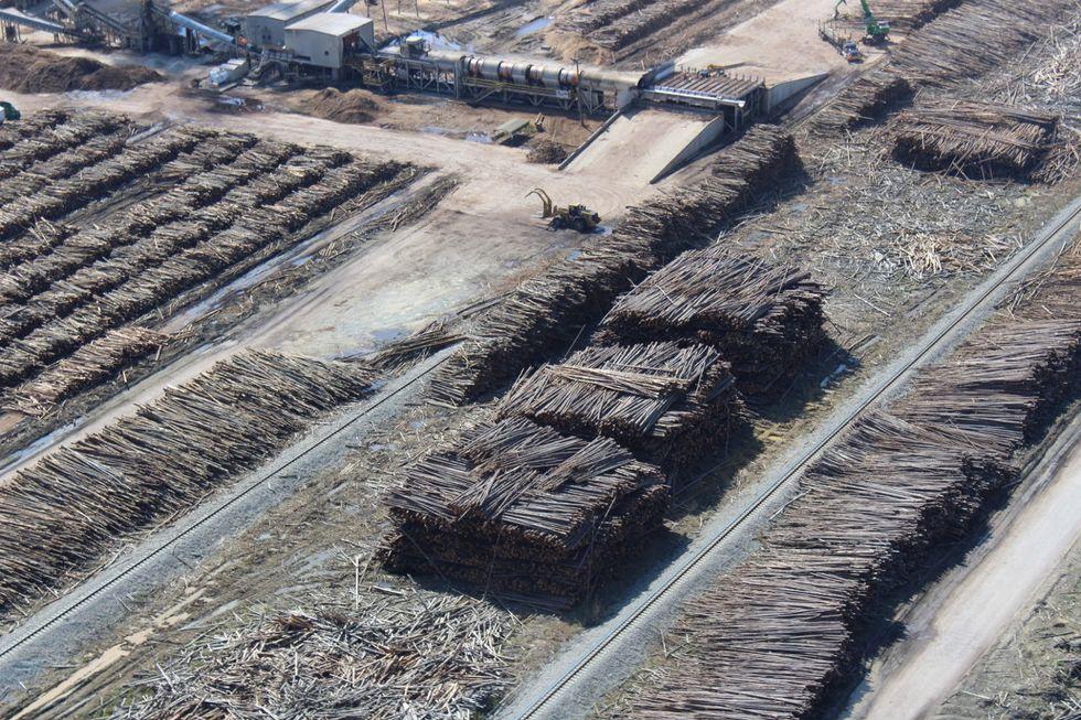 North Carolina trees wood pellets