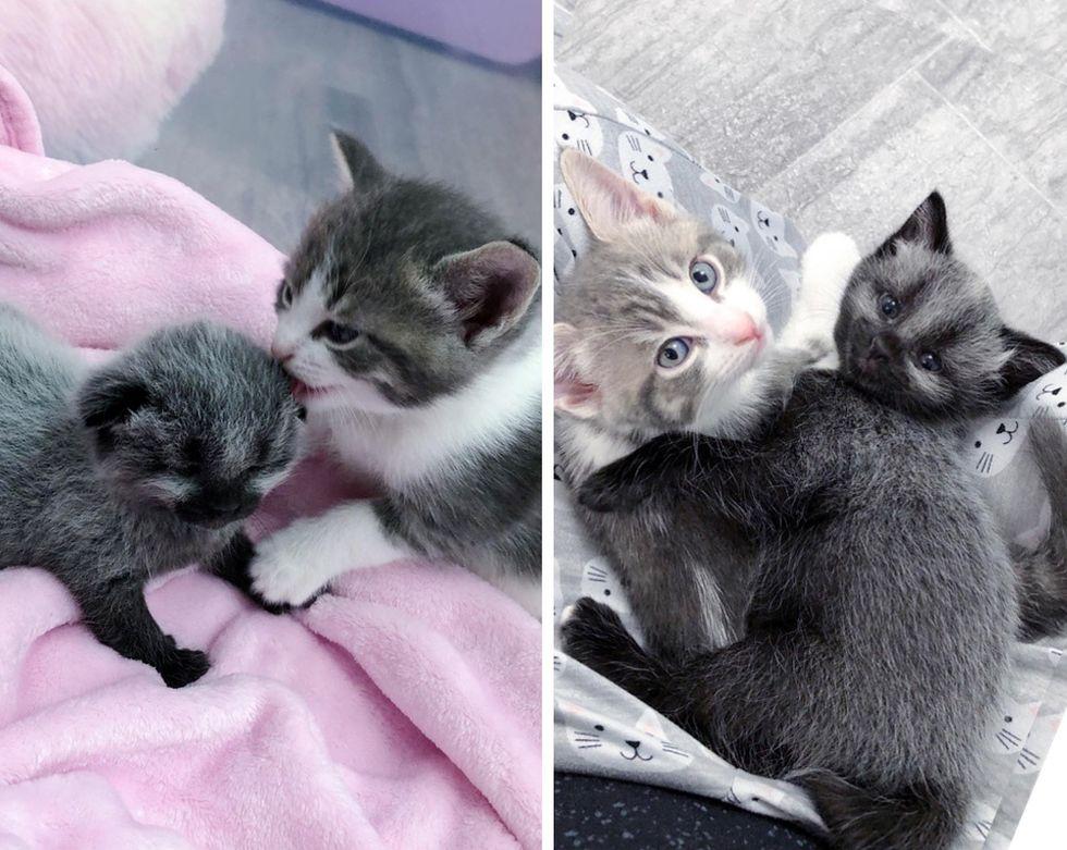 Gatito encontrado solo en la calle se convierte en un hermoso gato y encuentra amigo de por vida
