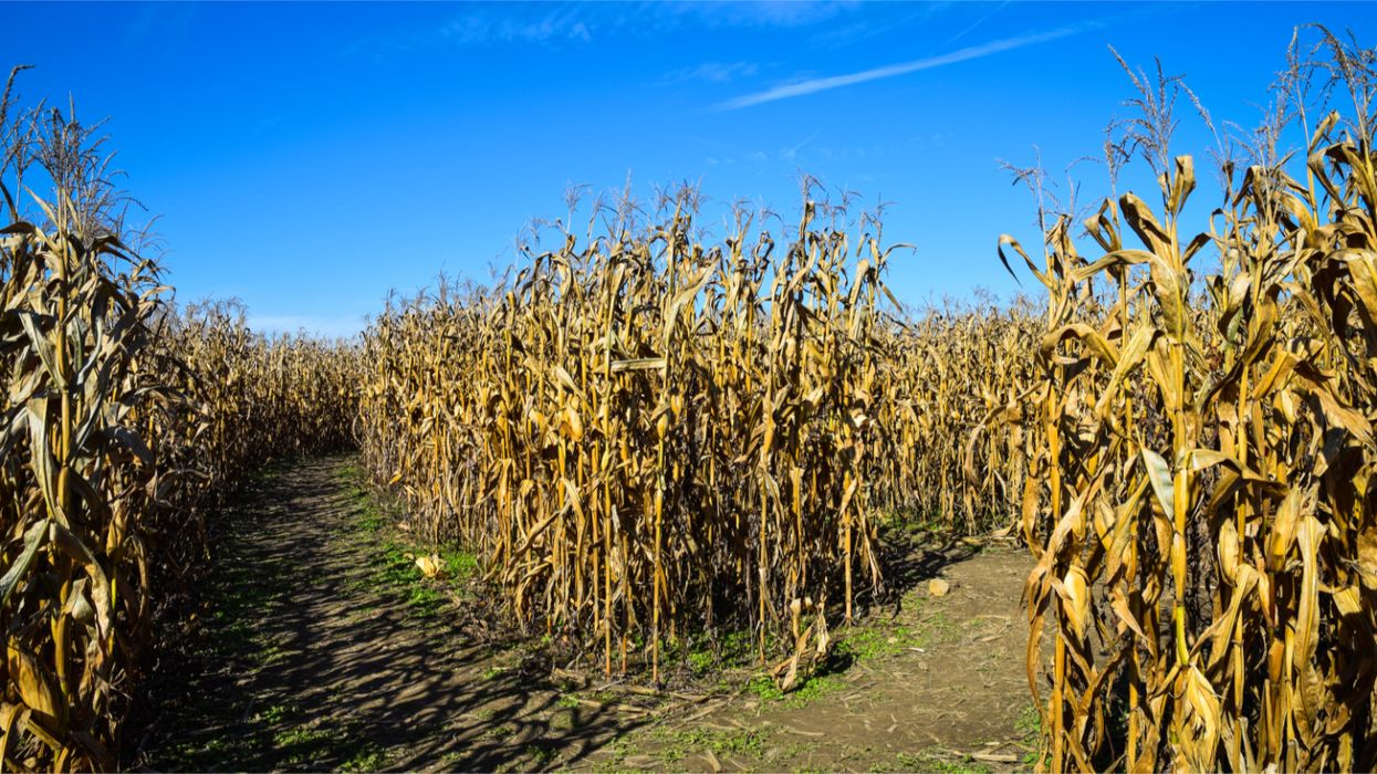 Reinventing agriculture for climate change
