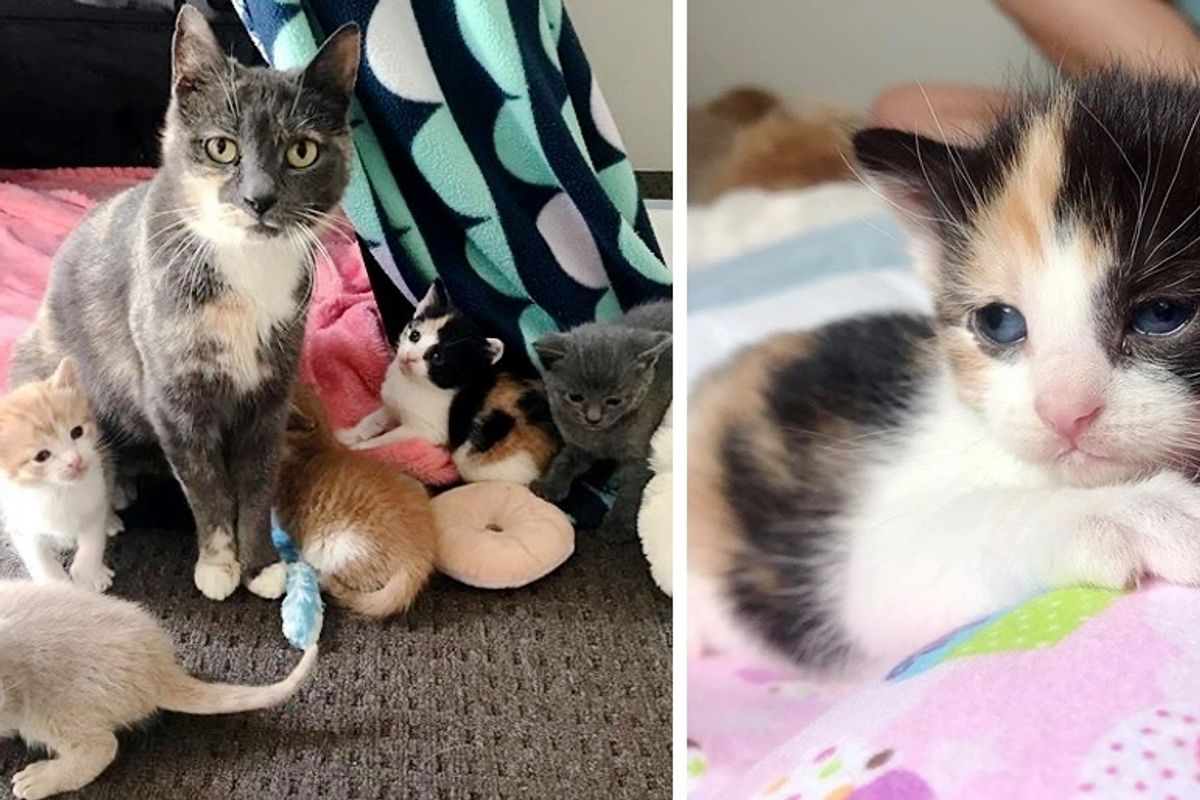 Stray Cat Found Shelter for Her Kittens in Backyard and Had Their Lives Changed Forever