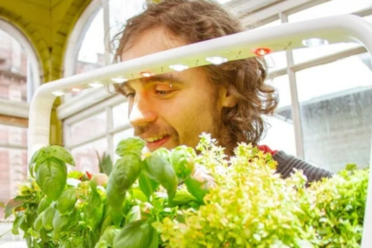 """Indoor """"smart garden"""" lets you grow your own organic food using minimal space."""