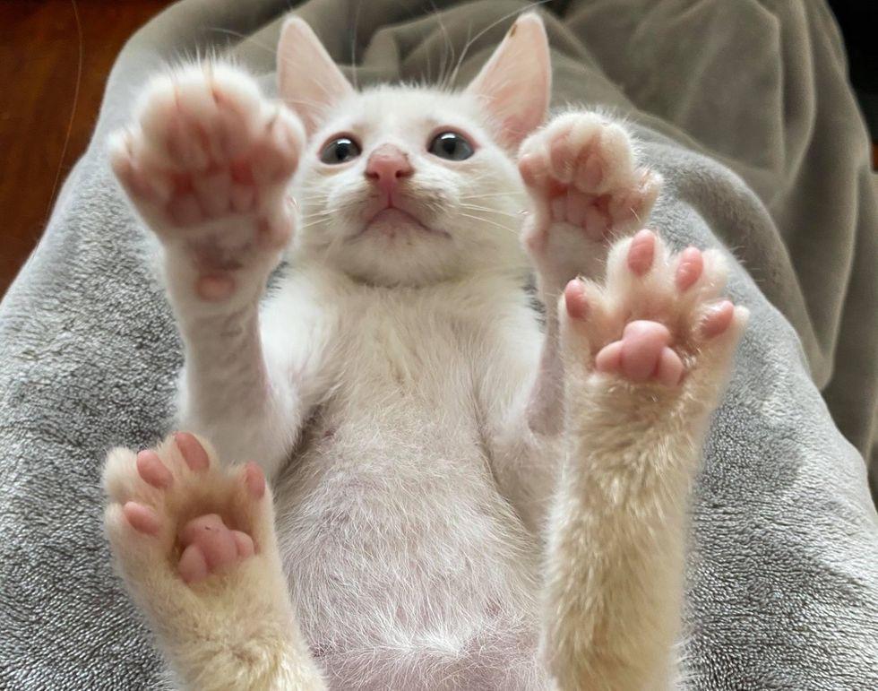 милый, котенок, лапы, бобы