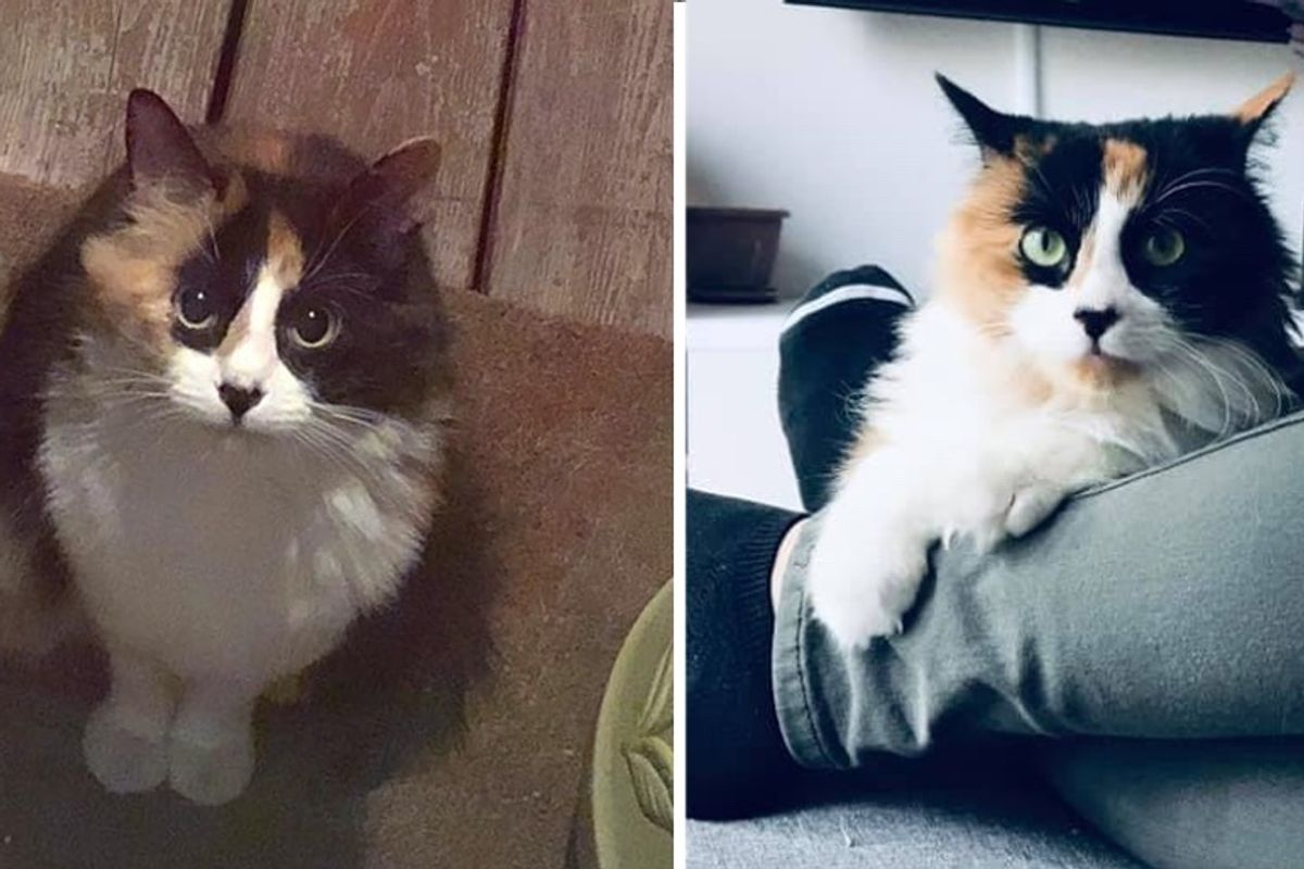 Stray Kitten Showed Up on Family's Doorstep, Now Has Her Dream Come True