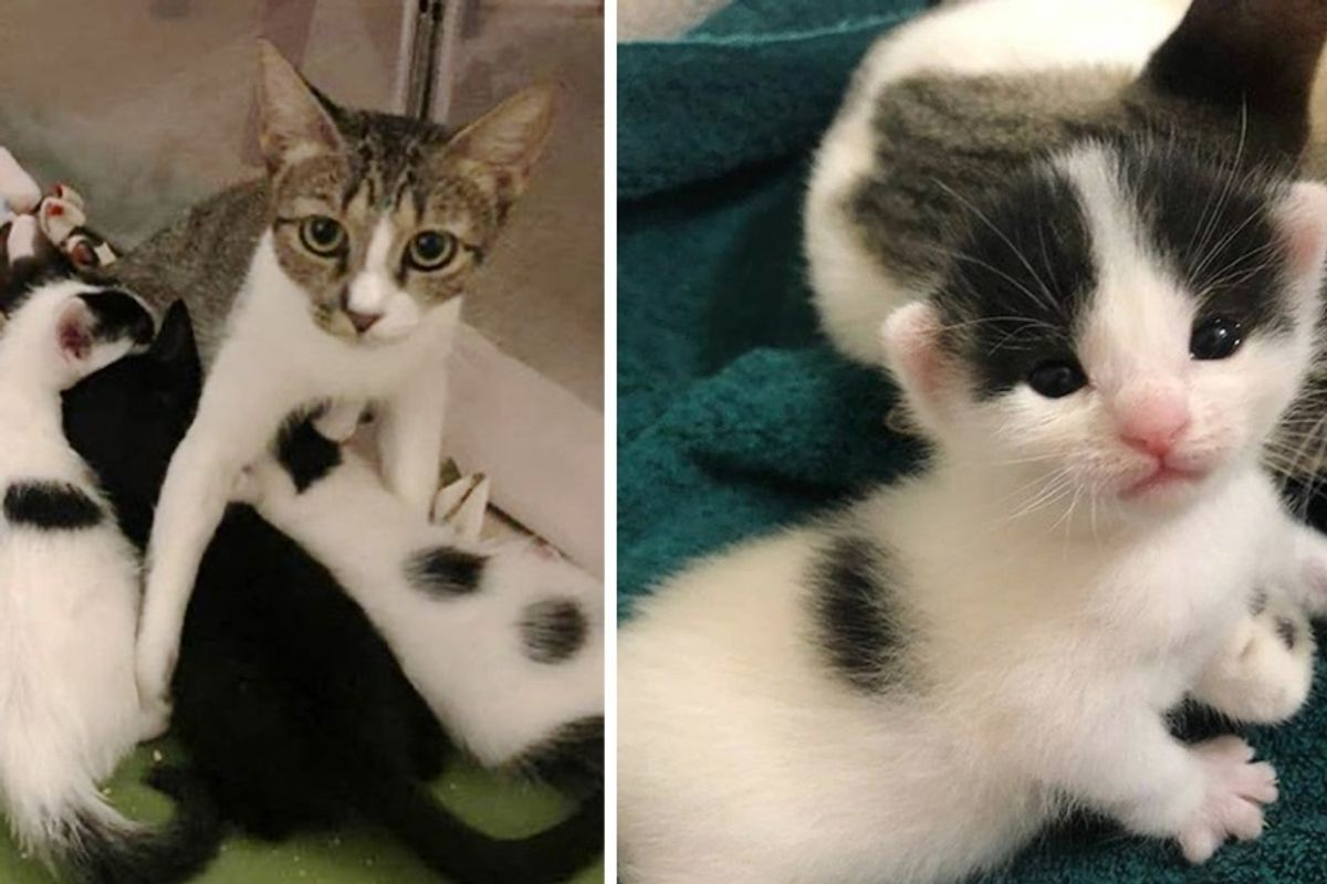 Stray Cat Gets Help for Her Kittens in the Nick of Time So They Can Thrive