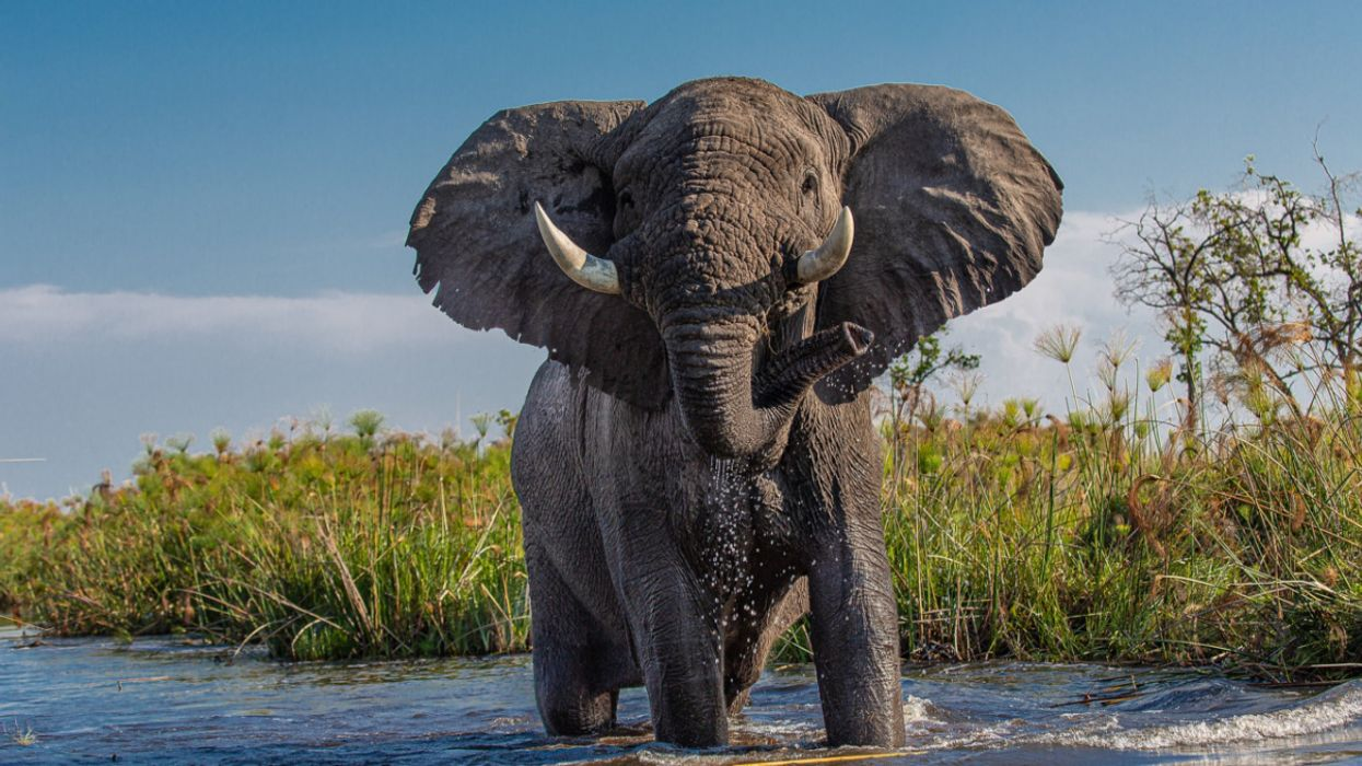 Bacteria in Botswana's Water Is Likely Cause of Mass Elephant Deaths