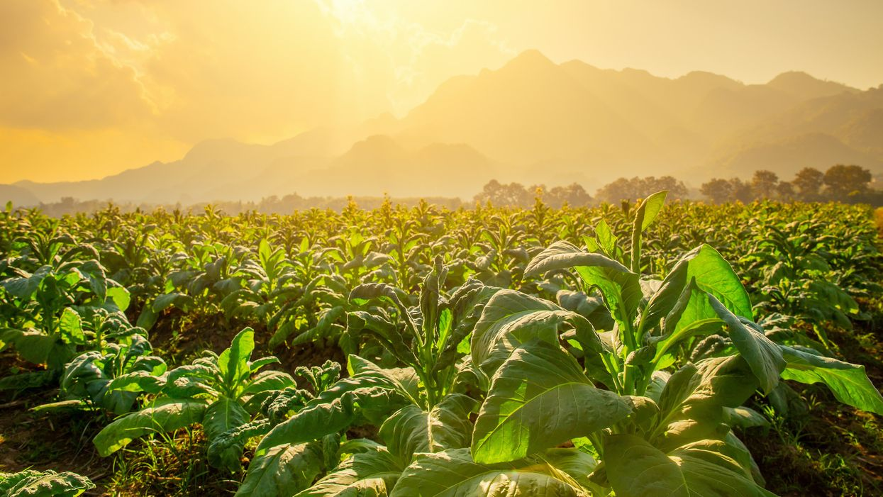 Plant-grown vaccines: the next step in medicine?