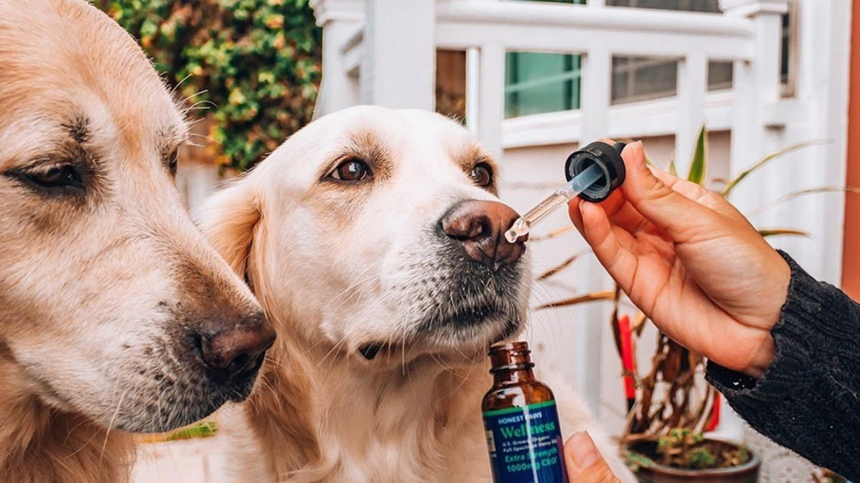 Best CBD for Dogs 2020 - Organic CBD Oil for Pets