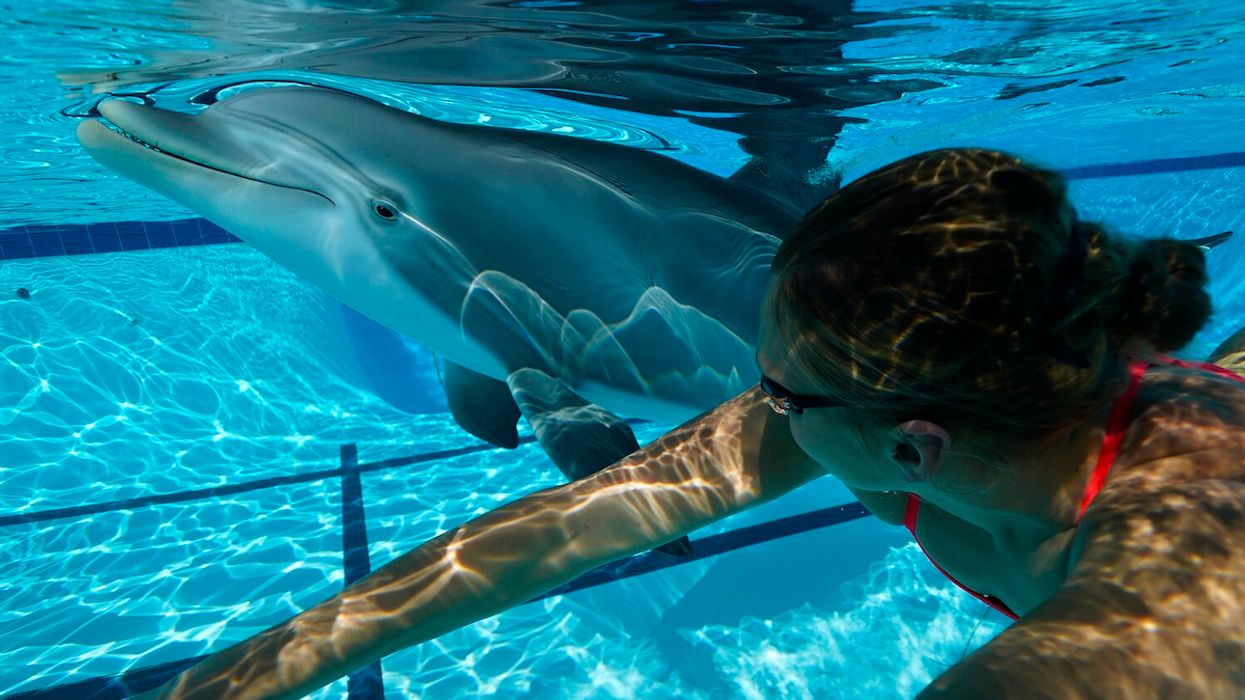 Will a $26M Robot Dolphin Replace Captive Animals in Aquariums and Theme Parks?