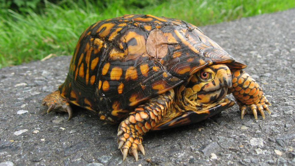 New South Carolina Law Protects Turtles From Wildlife Trafficking