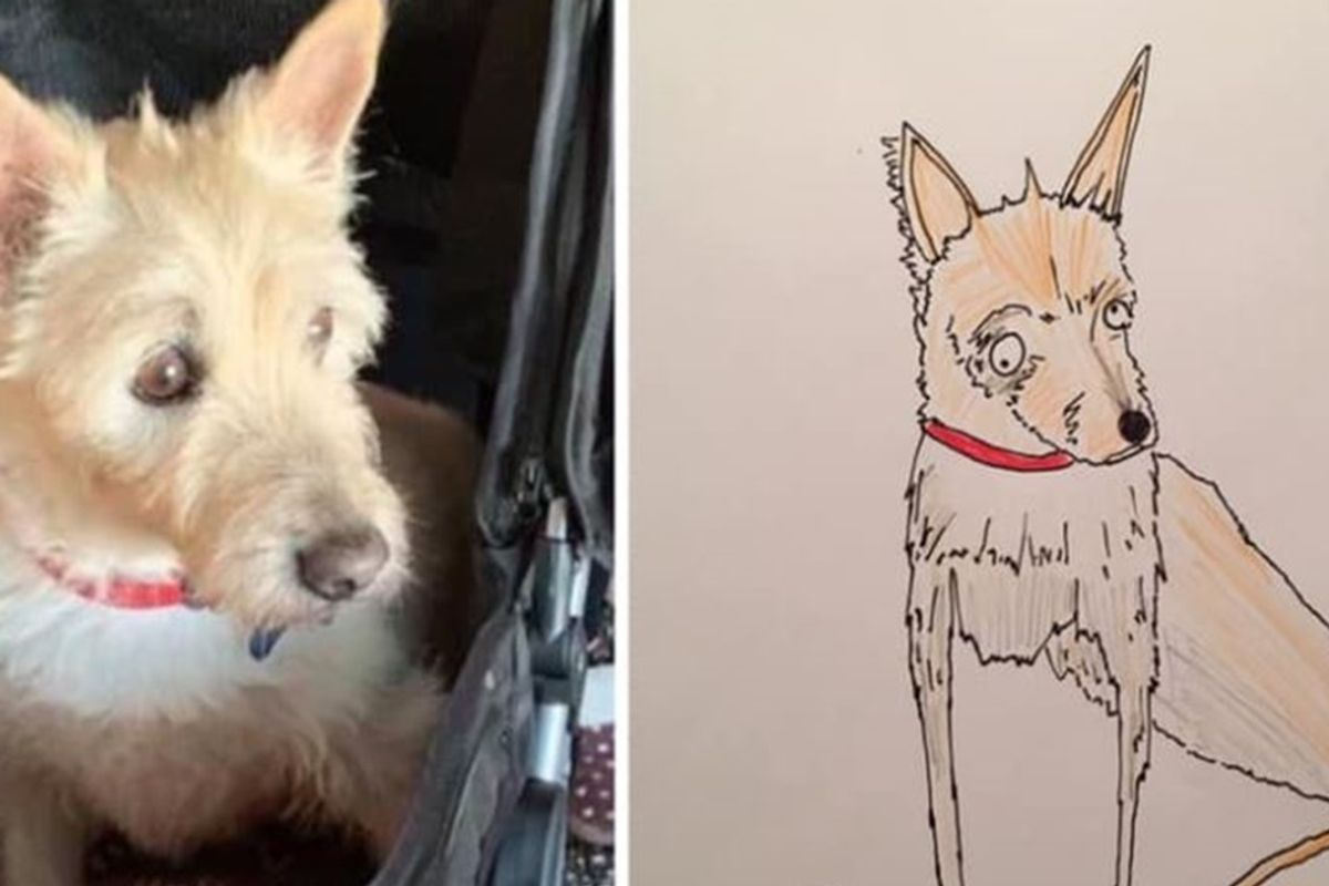 Dad's 'crap' sketches of people's pets have already earned $23,000 for homeless charity