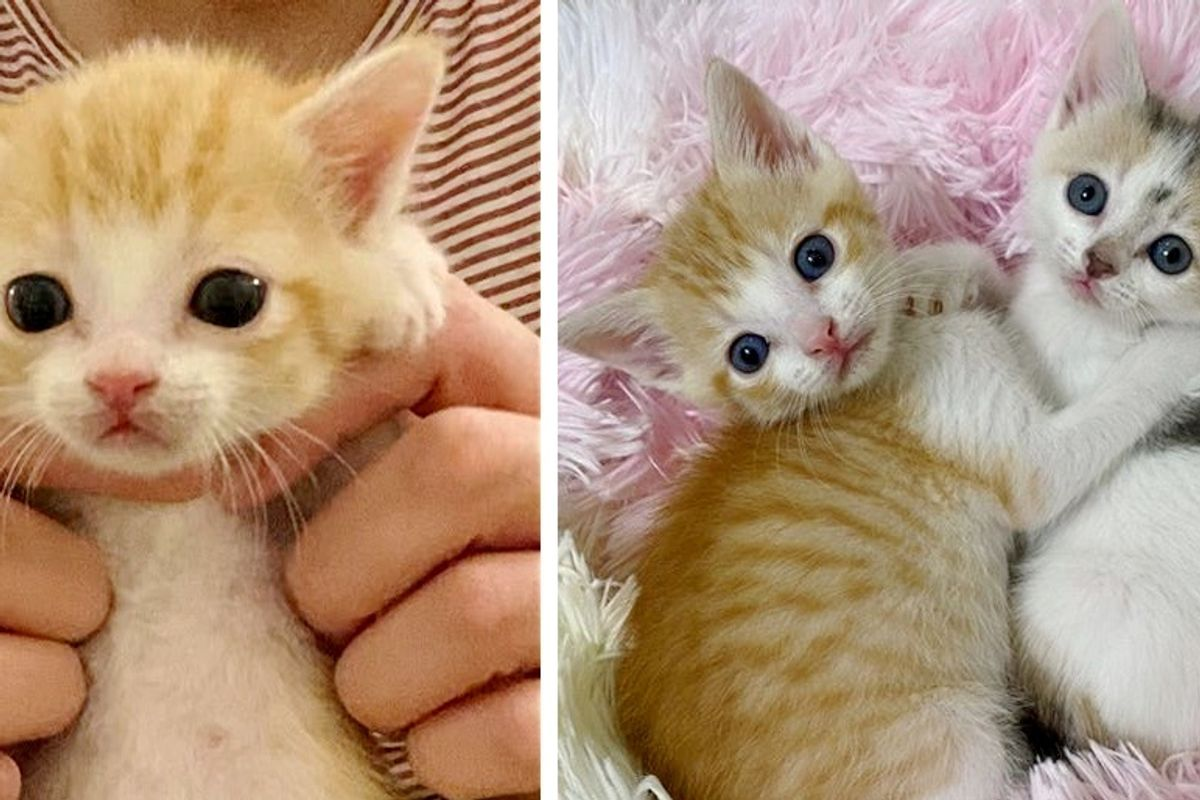 Kittens Found Left Behind in Parking Lot, Have Their Lives Turned Around by Kind Couple