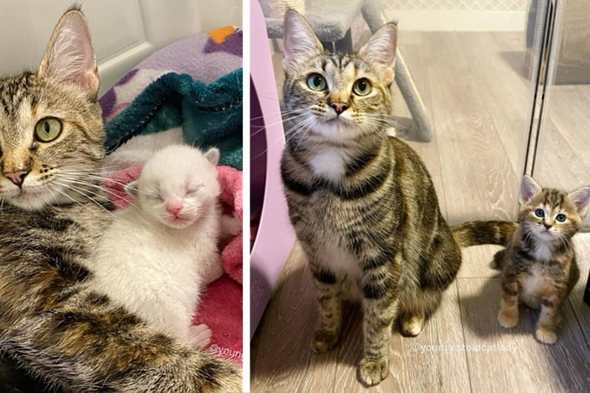 Stray Cat Found Kind Family to Take Her in So Her Kittens Could Have Better Lives