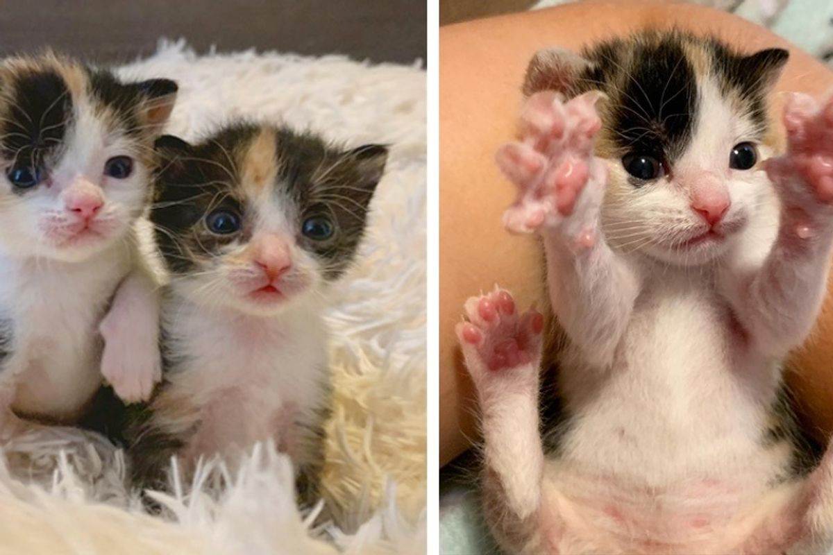 Two Kittens Found Near Road, Look Out for Each Other and Insist on Staying Together