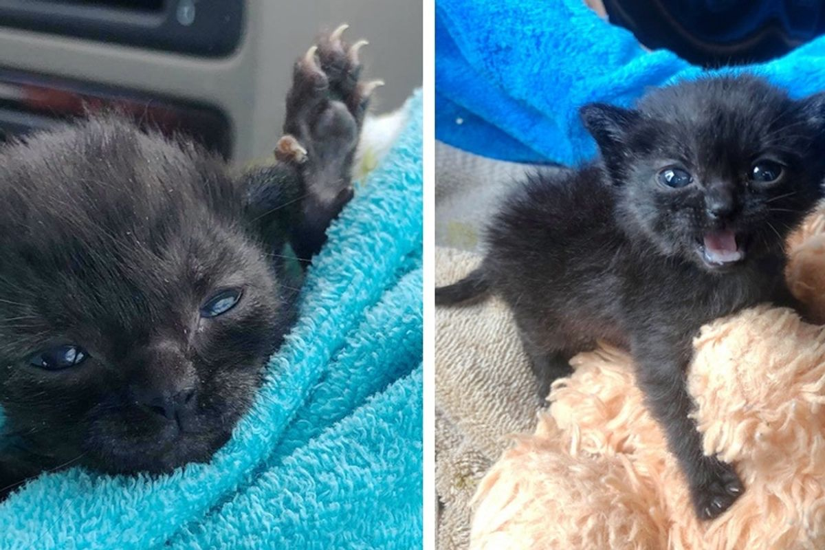 Kitten Found in Corner of Barn Shows Incredible Spirit, Has Her Life Turned Around by Kindness