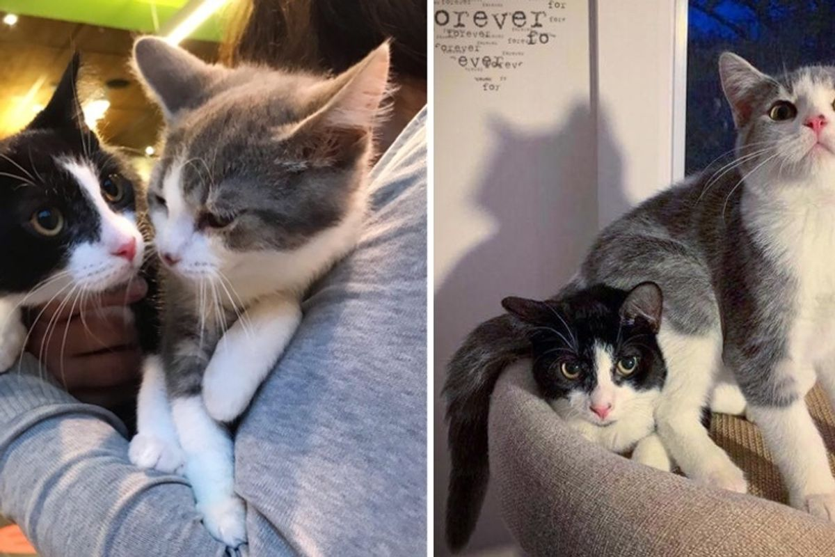 Kitten Brothers Found Wandering the Streets, Help Each Other Thrive and Hope for Home Together