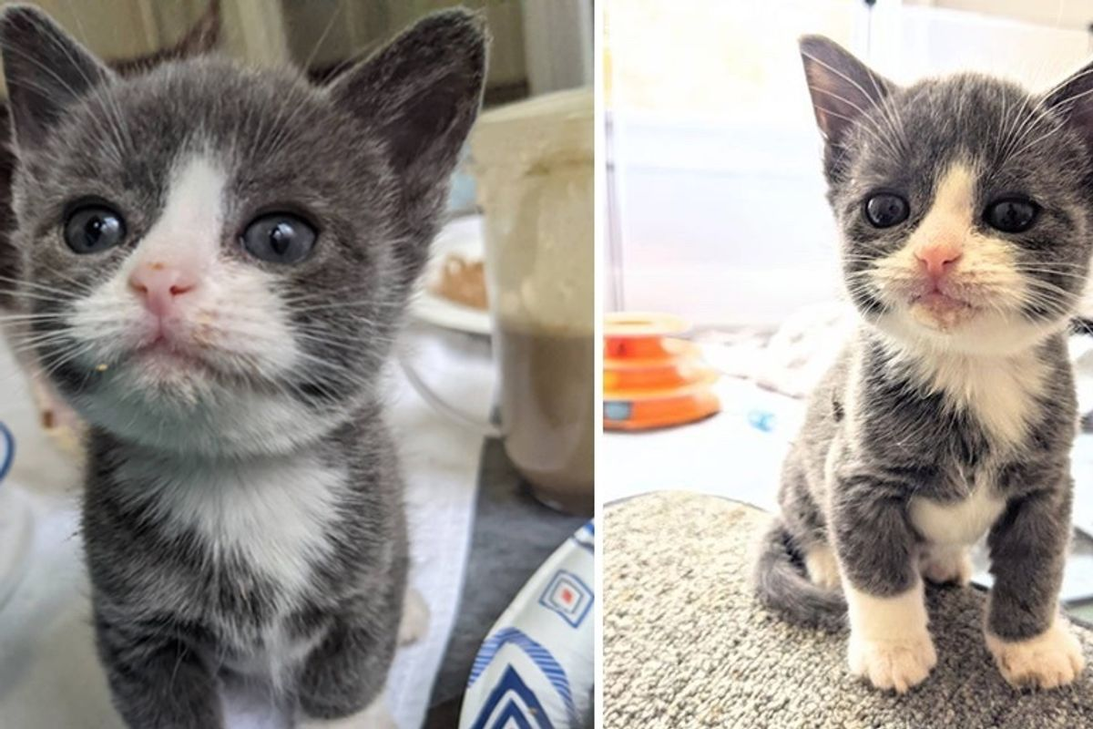 Kitten Half the Size He Should Be, is Determined to Live Full Life After Being Found without Mom