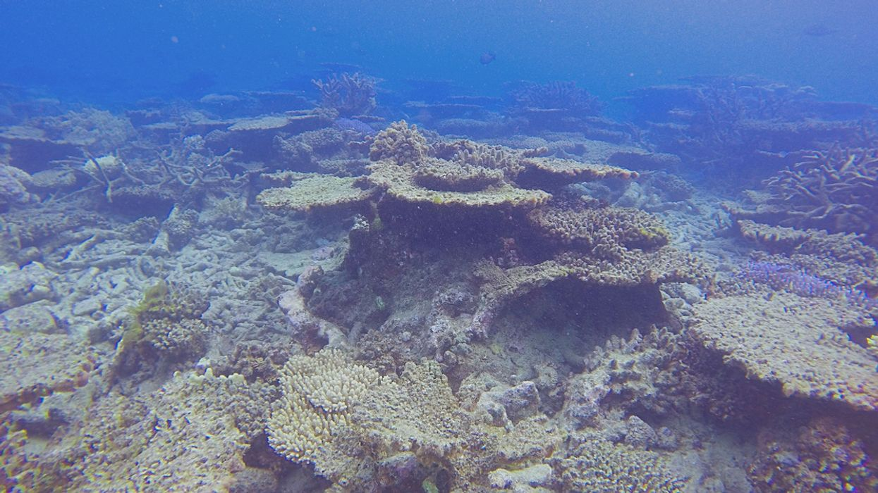 The Climate Crisis Has Already Cost the Great Barrier Reef More Than Half Its Corals