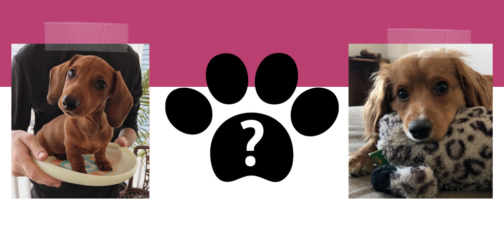 Odyssey Template: Create A Pet Profile To Show Off Your Furry BFF
