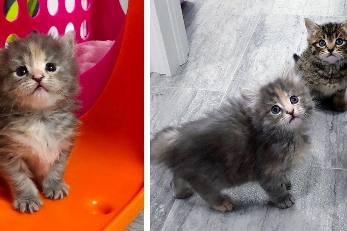 Kitten Sneaks Out of Her Room to Befriend New Kitten in Foster Home