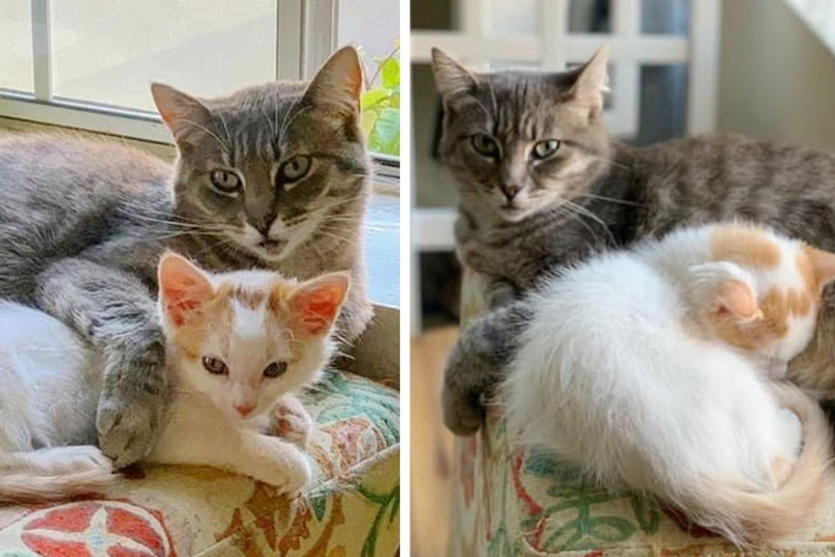 Shy Cat Finds Courage with Help from Kitten, and Hopes for Dream Home After Months of Waiting