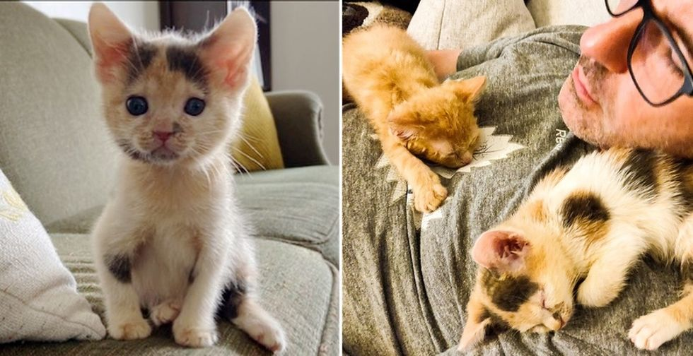 Kittens Cuddle Their Way into Hearts of Family After Being Brought Back from the Brink