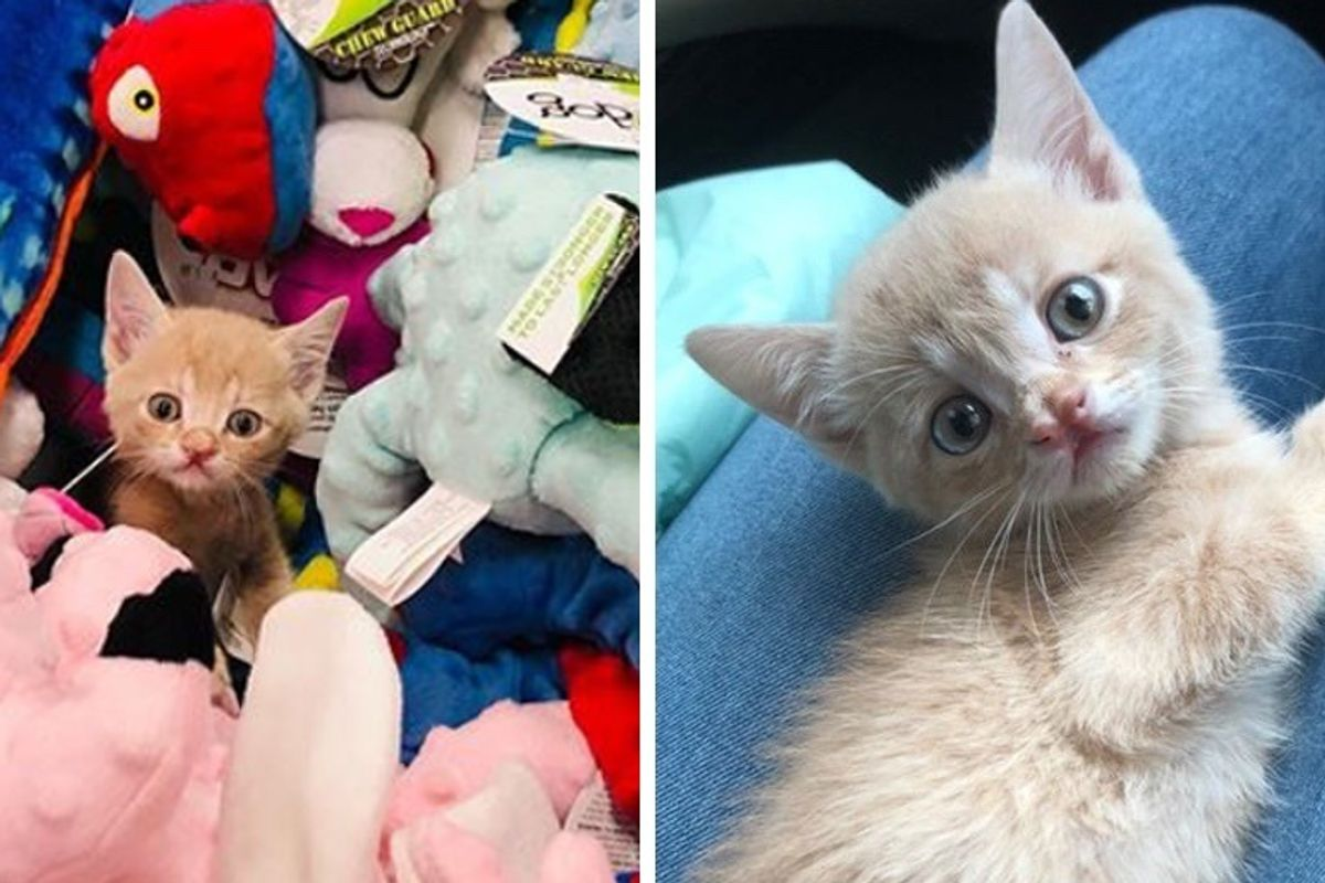 Sweet Kitten Insists on Being Carried Everywhere He Goes After He was Rescued