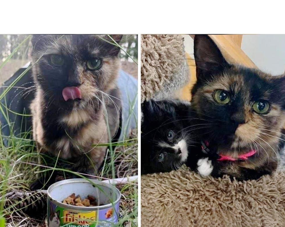 Una gata callejera se acercó a una familia desde una tubería de drenaje para que sus gatitos pudieran tener la oportunidad de sobrevivir.