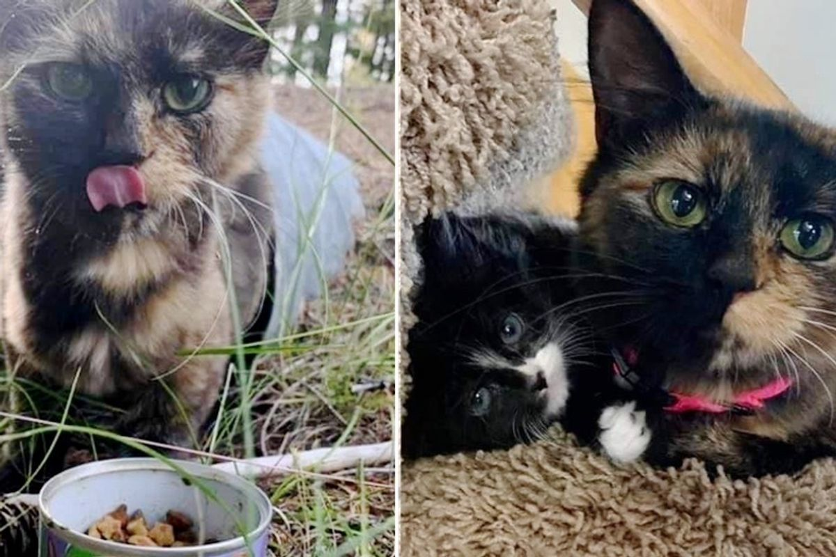 Stray Cat Walked Up to Family from Drain Pipe So Her Kittens Could Have Chance to Thrive