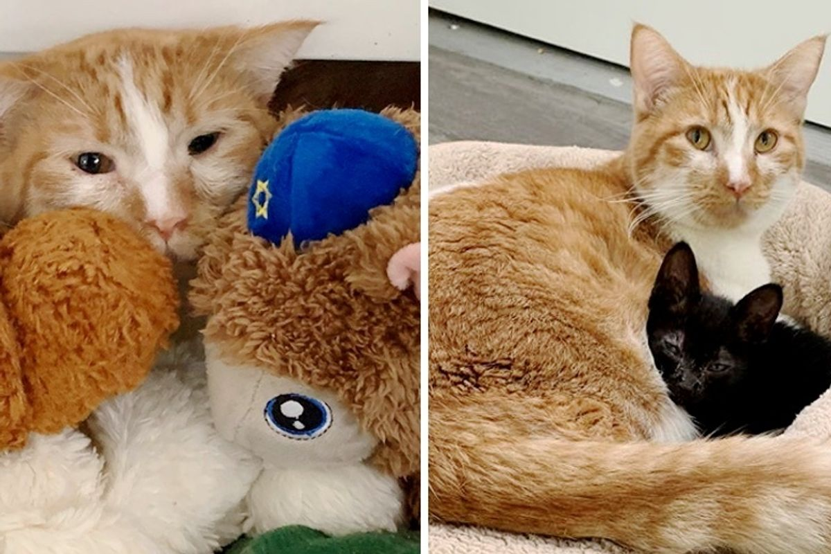 Shy Cat Hides Behind Snuggle Toys Until He Meets Kitten Who Needs a Friend