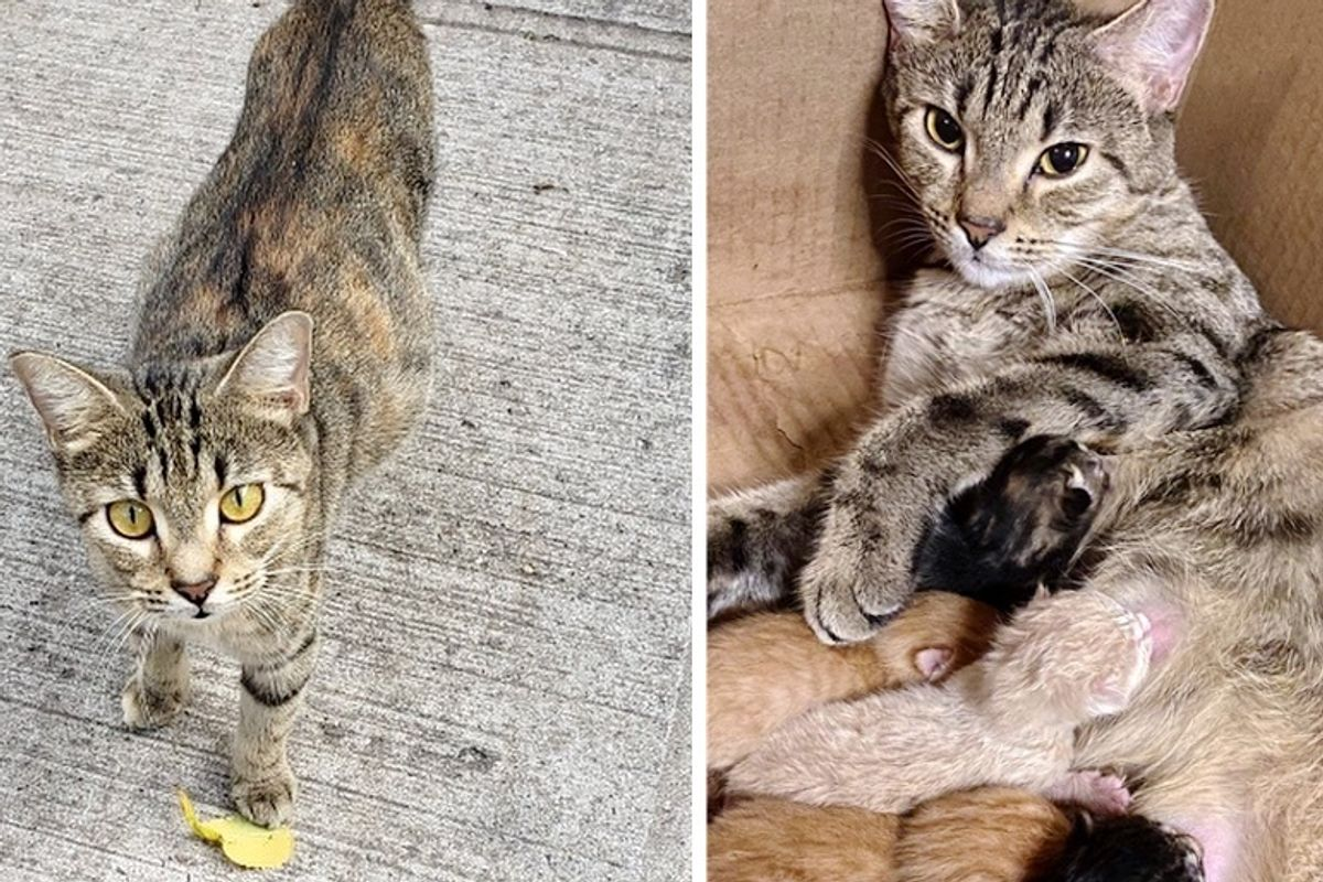 Street Cat Walks Right into Carrier So She and Her Kittens Can Start New Life