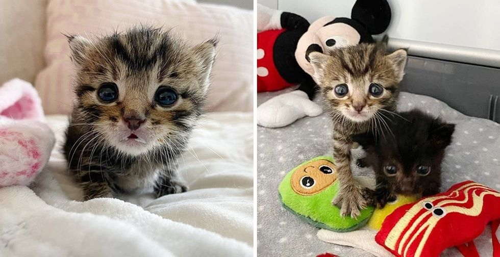 Tiny Kitten with Large Eyes Came to Foster Home with His Brother, They Turned Out to Be Sweetest Pair