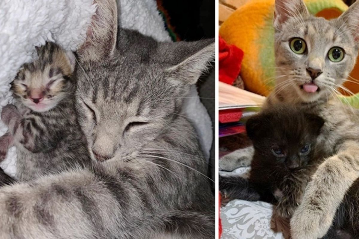 Family Found Stray Cat and Her Newborn Kittens on Their Patio and Knew They Had to Help