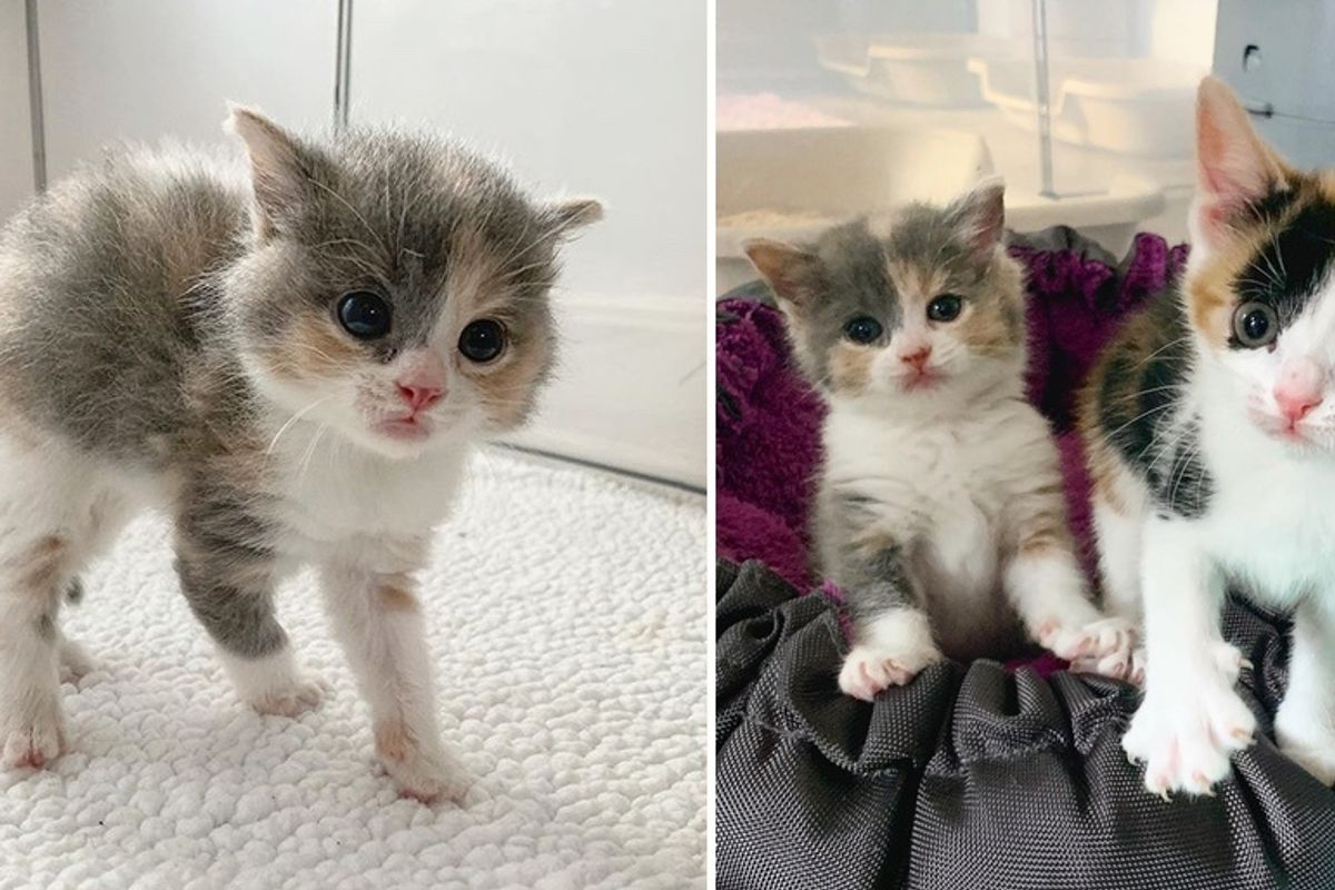Pint-sized Kitten Has Her Dream Come True with New Sisters After Being Found Alone Outside