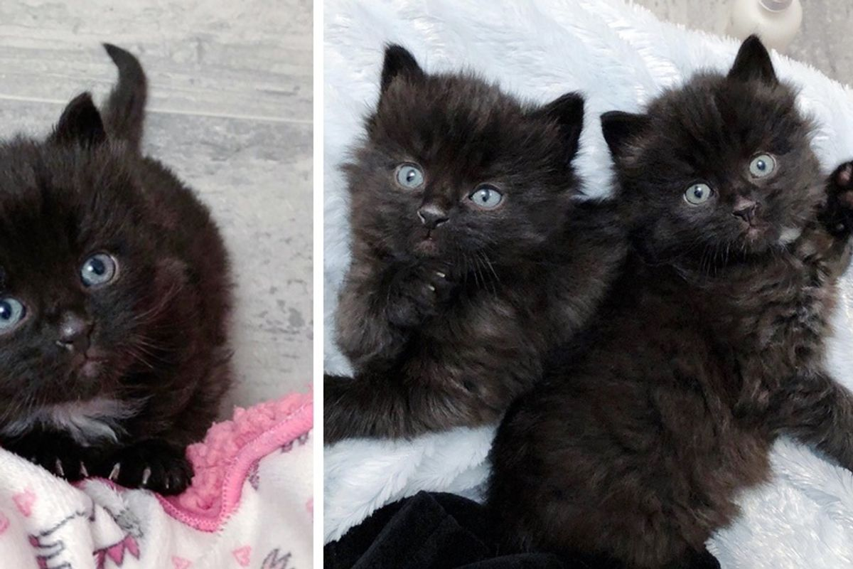 Kittens Found Wandering Outside, Start New Journey Together Through Act of Kindness